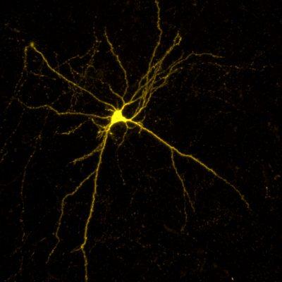 Neuron Christiaan Zeelenberg