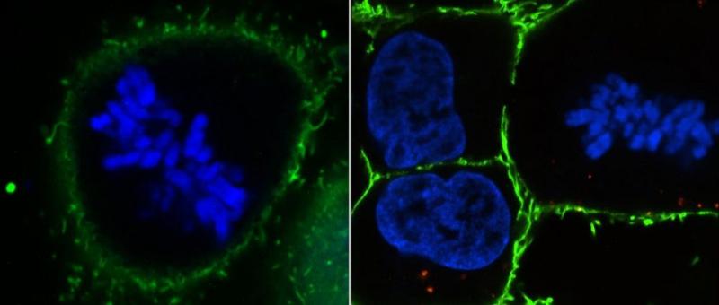 chromosomes gert van capellen